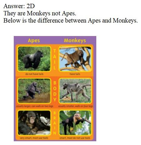 Envision-Math-Common-Core-1st-Grade-Answers-Key-Topic-2-Fluently-Add-and-Subtract-Within-10-Pick-a-Project-2D